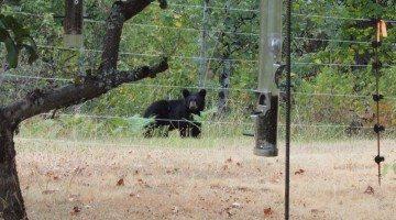 Photo via  Revelstoke Bear Aware website