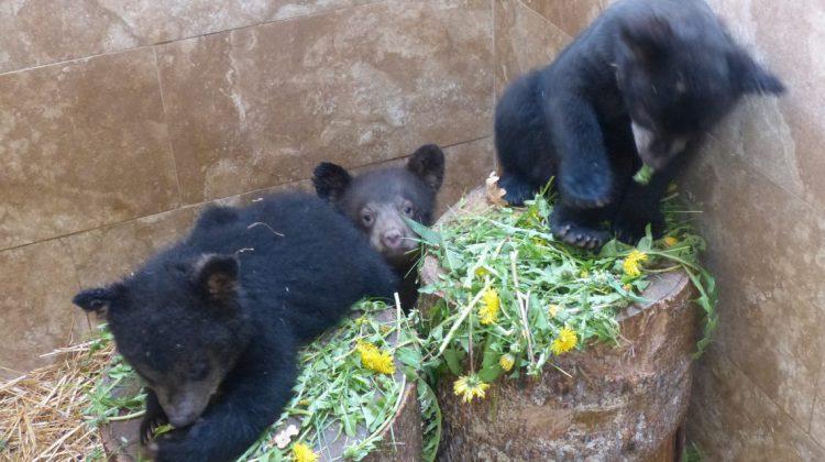 bears-2-1140x641